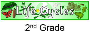 2nd life cycle